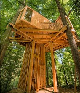 Tree House Celje.jpg